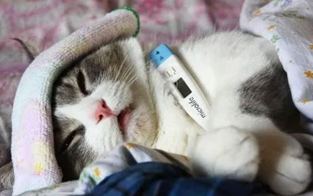 [VIDEO] Ini 4 tanda jika kucing anda sedang demam